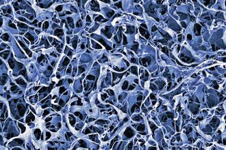 Structure osseuse en biomatériaux vue au microscope - 1